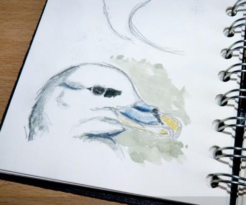 Bird Sketches - Fulmar