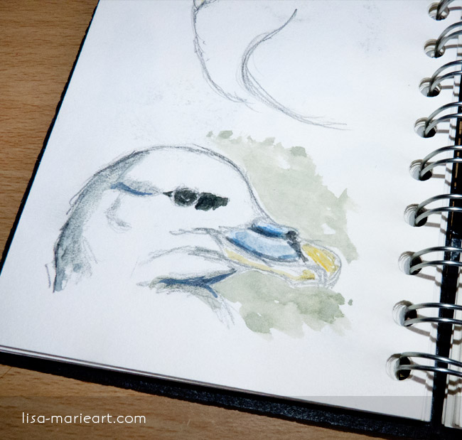 Bird Sketches - Fulmar