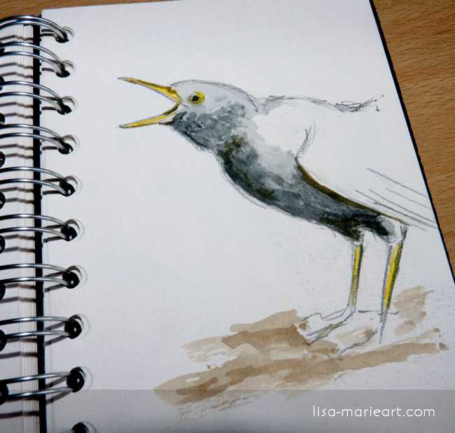 Bird Sketches - Blackbird
