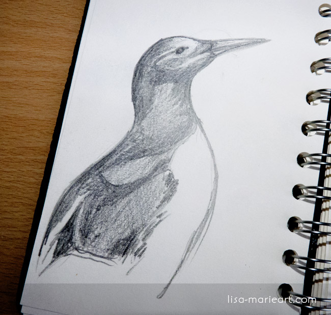Bird Sketches - Guillemot