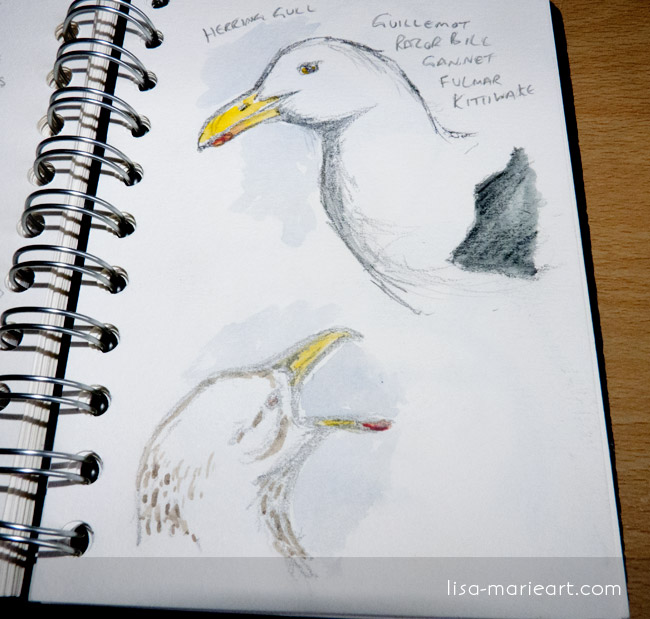 Bird Sketches - Gulls